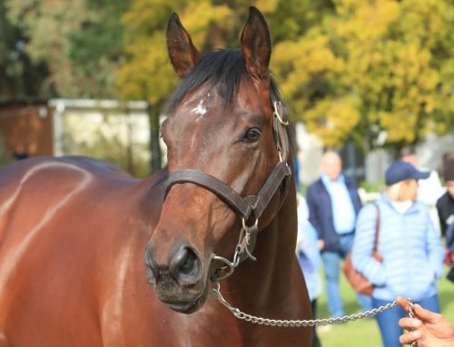 Royal Mo Showed to Country's Top Breeders